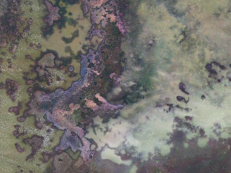 Colores fascinantes en la Isla de Buda, Delta del Ebro