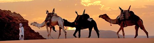 SITC Argelia