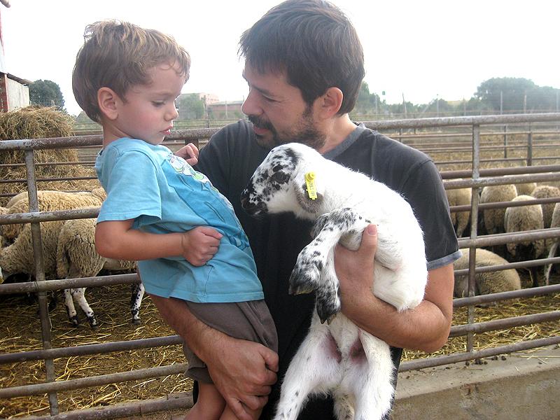 Empatizando con los corderos