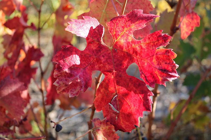 El otoño pintado en las viñas del Priorat