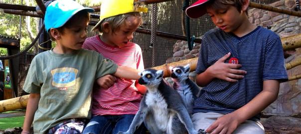Acariciando lémures en MundoMar, Benidorm