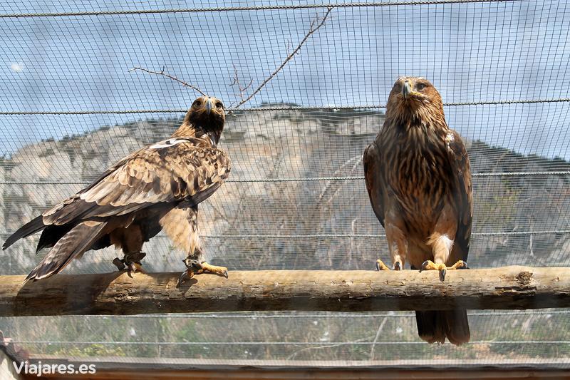 Aves en el Zoo dels Pirineus, Solsonès