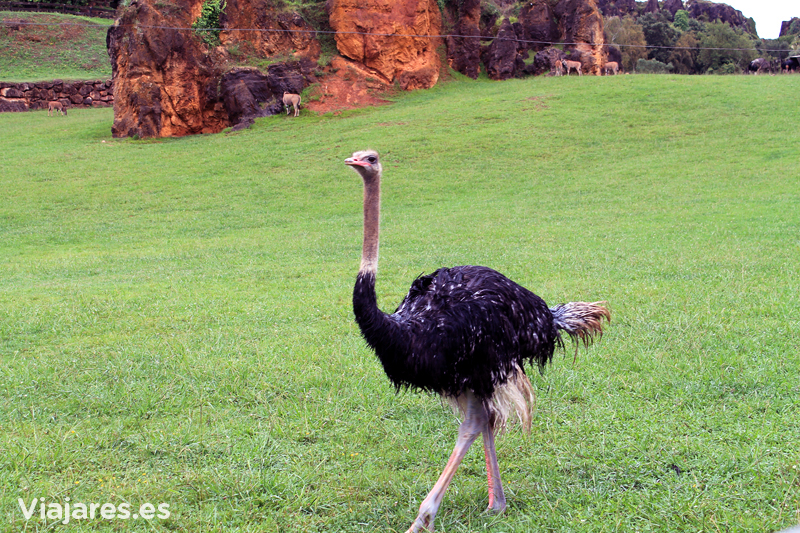 cantabria-cabarceno-con-ninos-avestruz