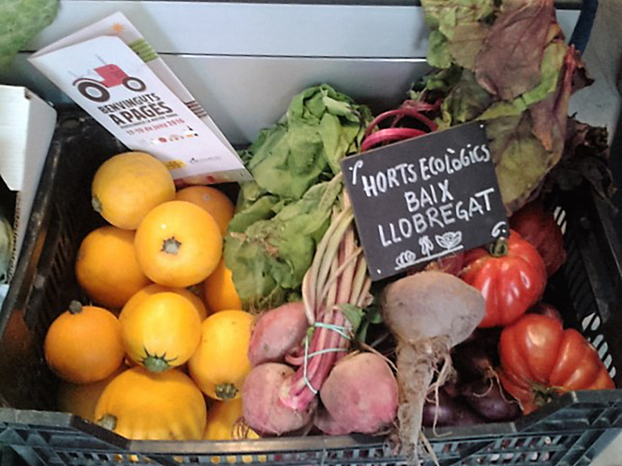 Cesta de productos ecológicos procedentes del Parc Agrari del Llobregat