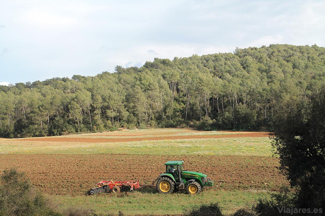 Trabajos agrícolas en Can Borrell