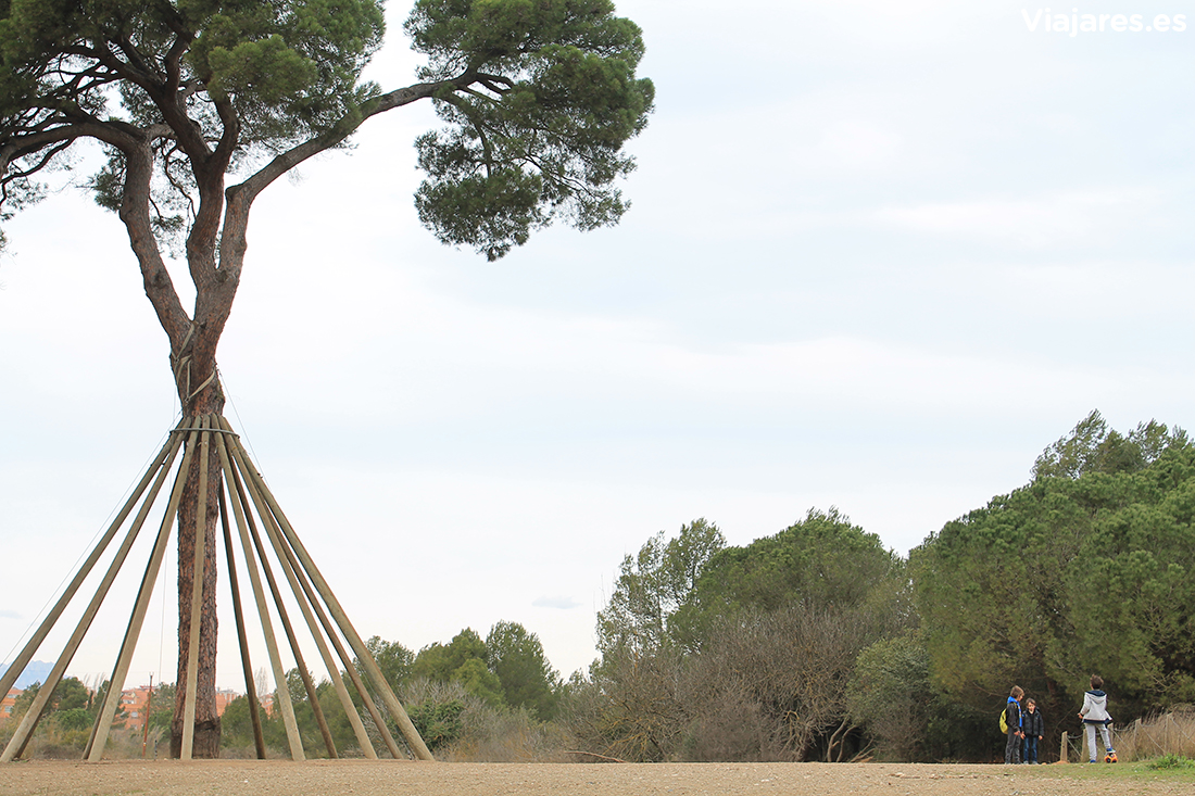 El majestuoso pino bautizado Pi d'en Xandri