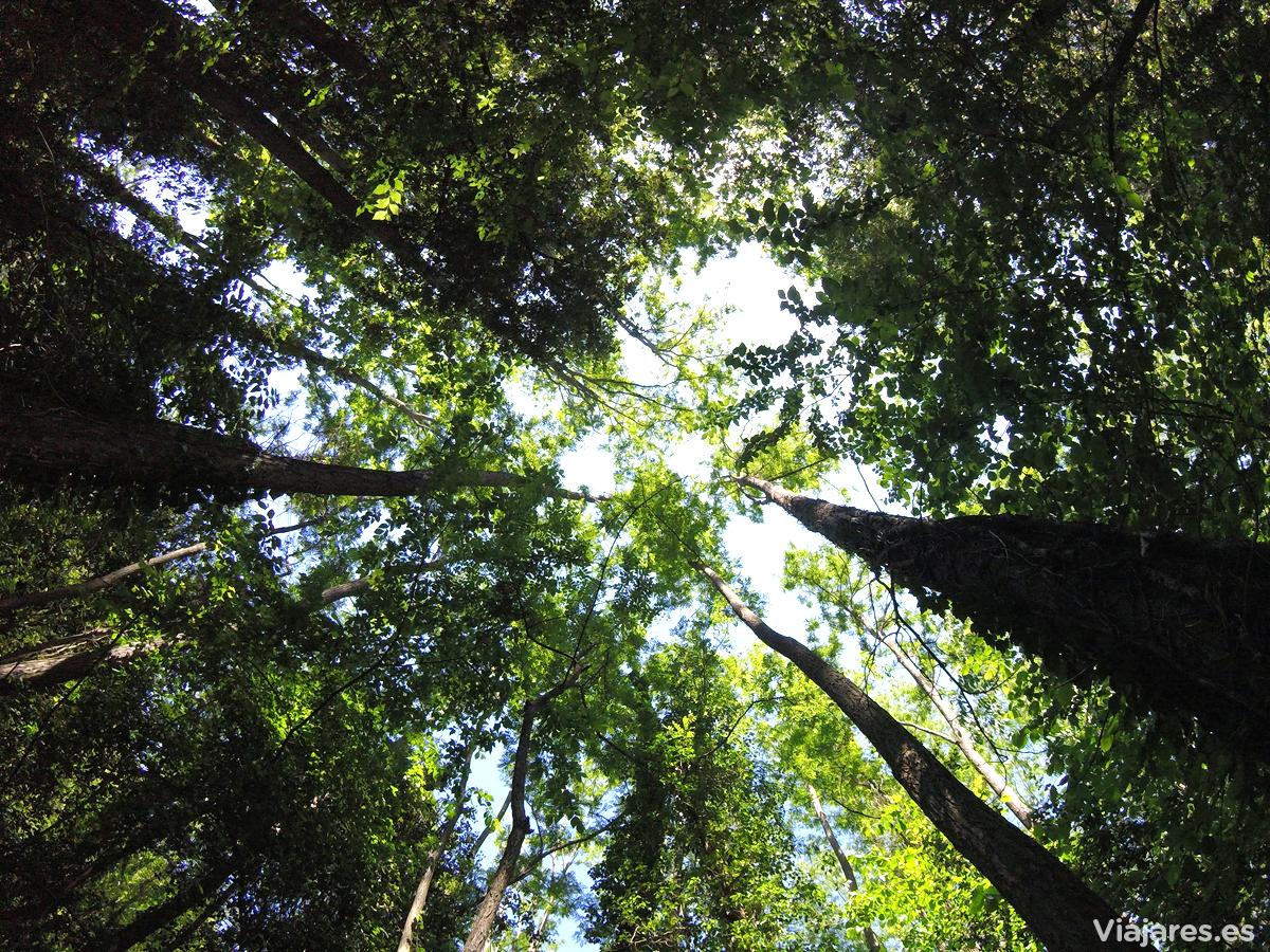 Bosque en el Parque Natural del Montseny