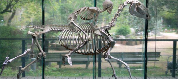 Un jinete con su montura en el Muséum de Toulouse