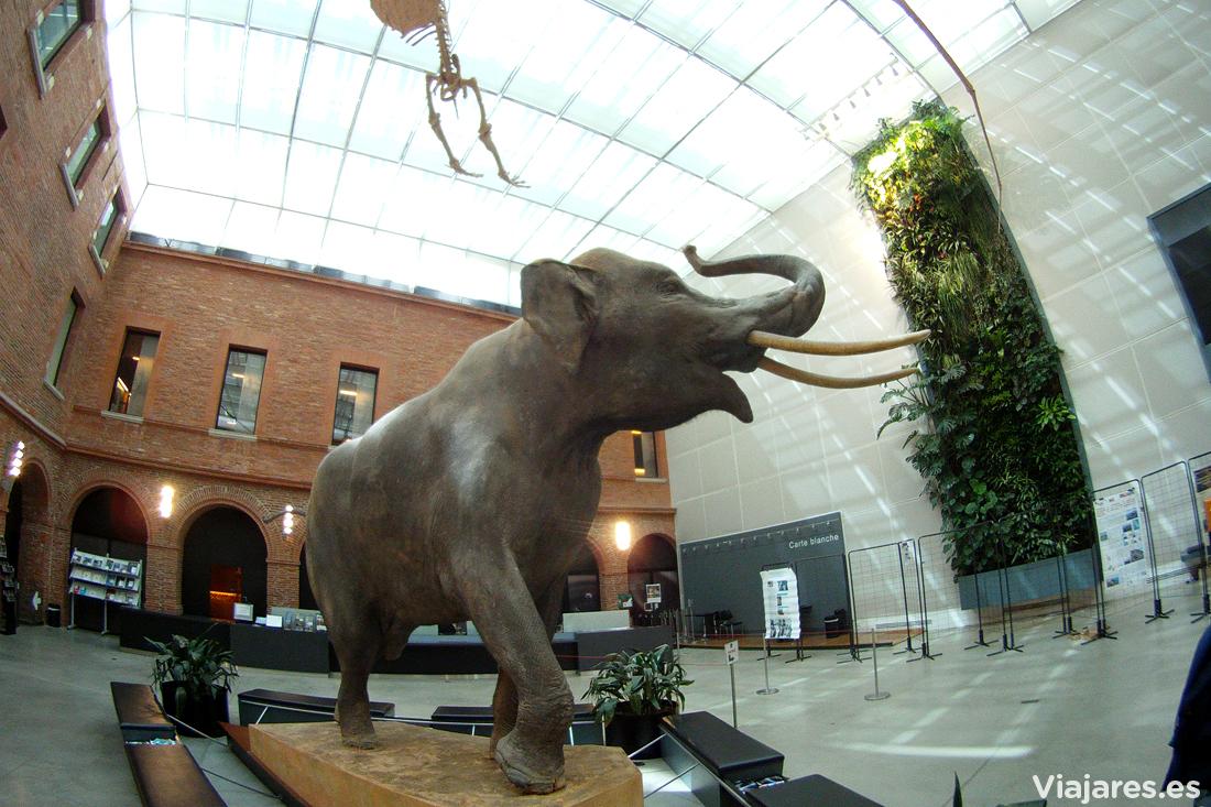 Hall de entrada al Muséum de Toulouse