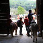 Ponys en las instalaciones de Nou Ranxo