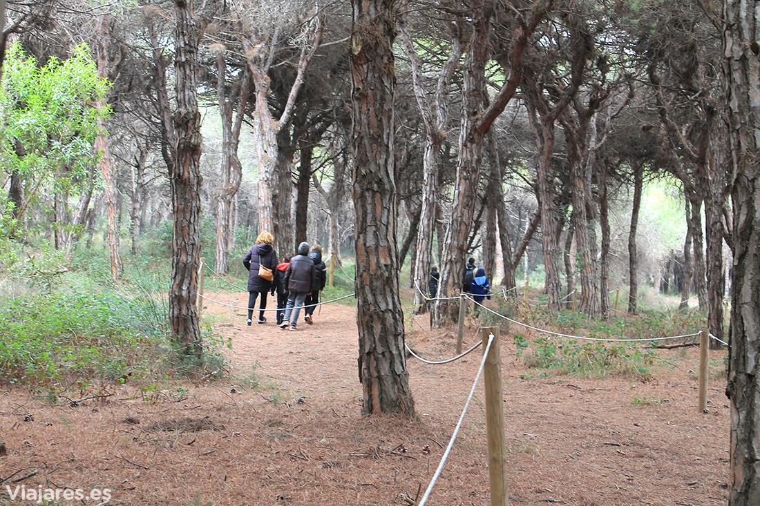 Can Camins es una espacio natural protegido en el Delta del Llobregat
