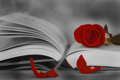 Rosa y libro tradicional de Sant Jordi