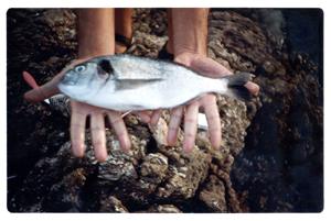 Viajares pesca de lectores y peces