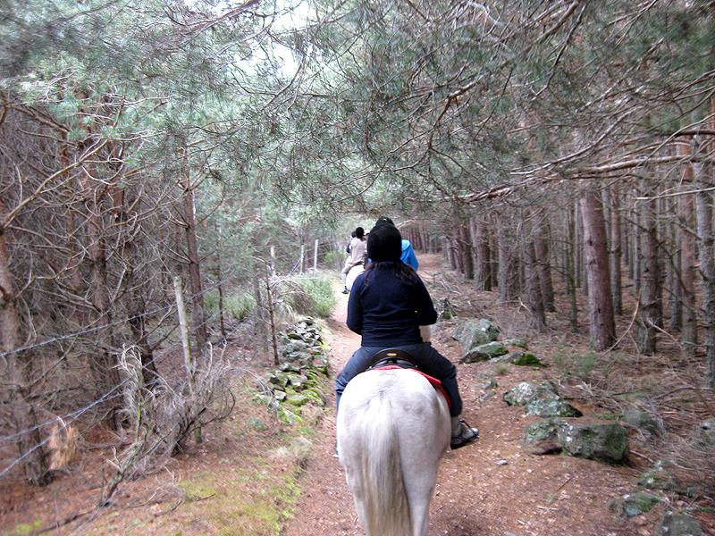 Paseo a caballo por la Sierra de Gredos