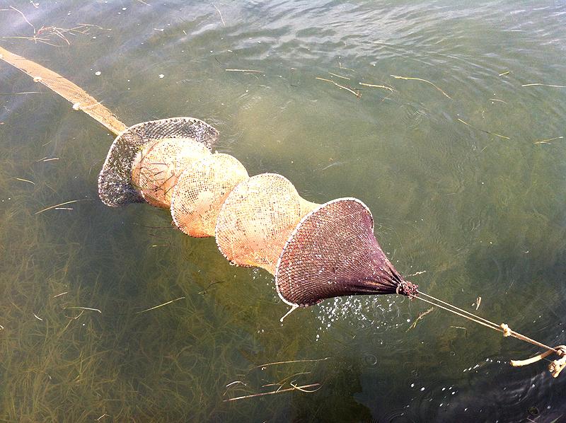 Pesca con lo gànguil